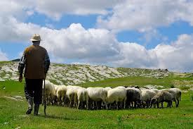 Пастухи и стадо