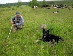 Пастухи и стадо_1